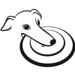 Greyhound frisbee